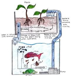 aquaponics diagram [ 1658 x 1920 Pixel ]