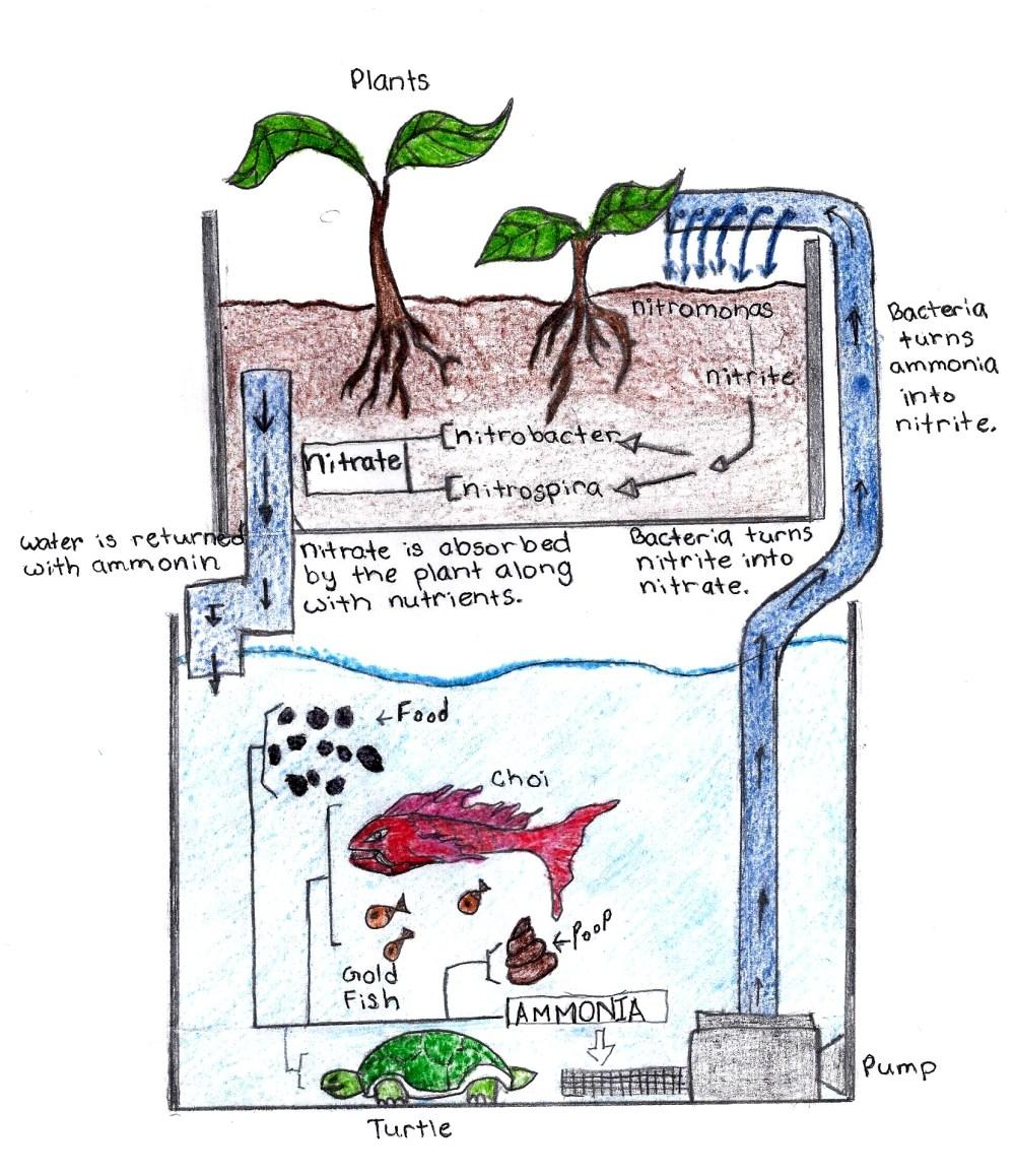 medium resolution of aquaponics diagram