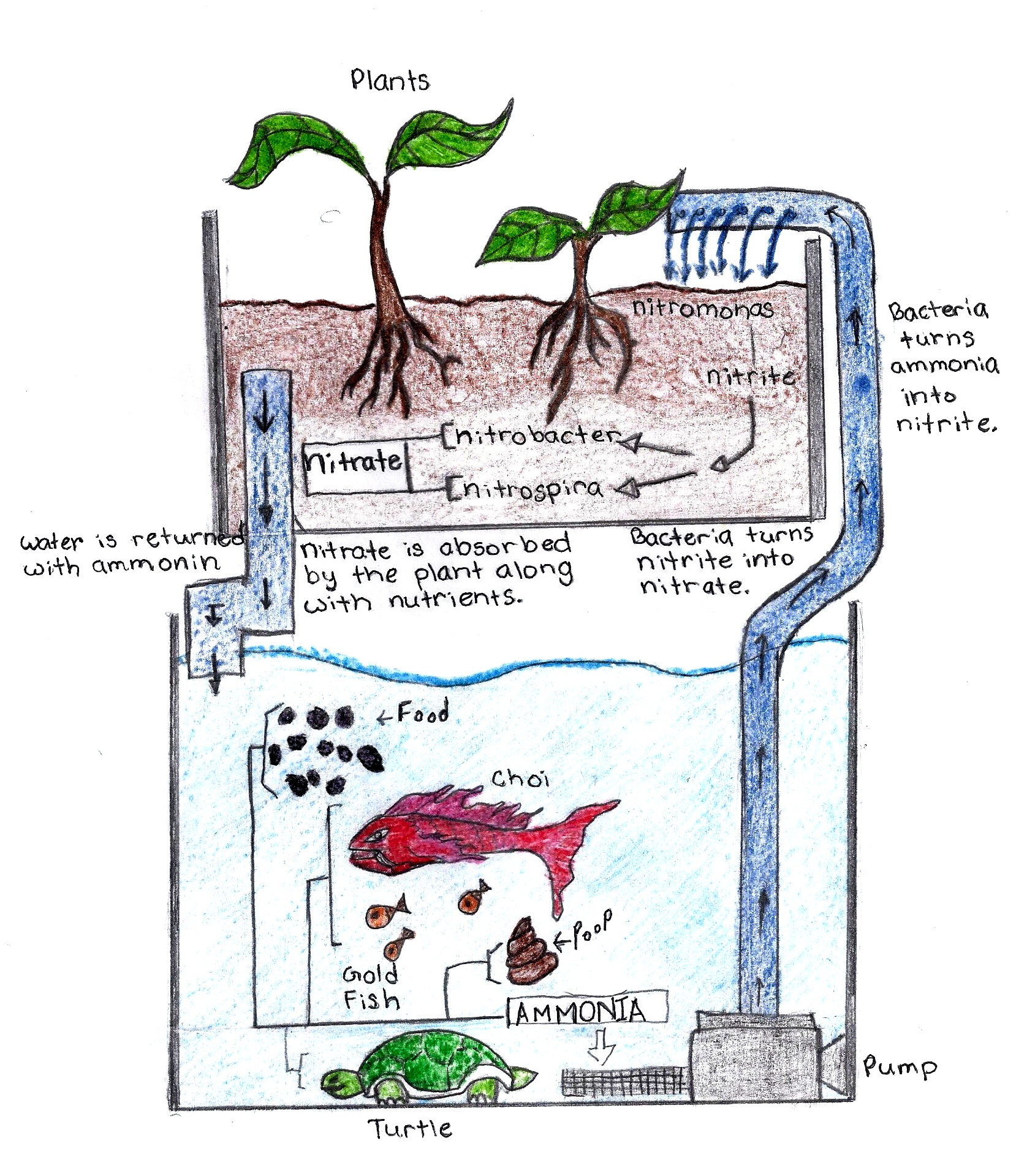 hight resolution of aquaponics diagram