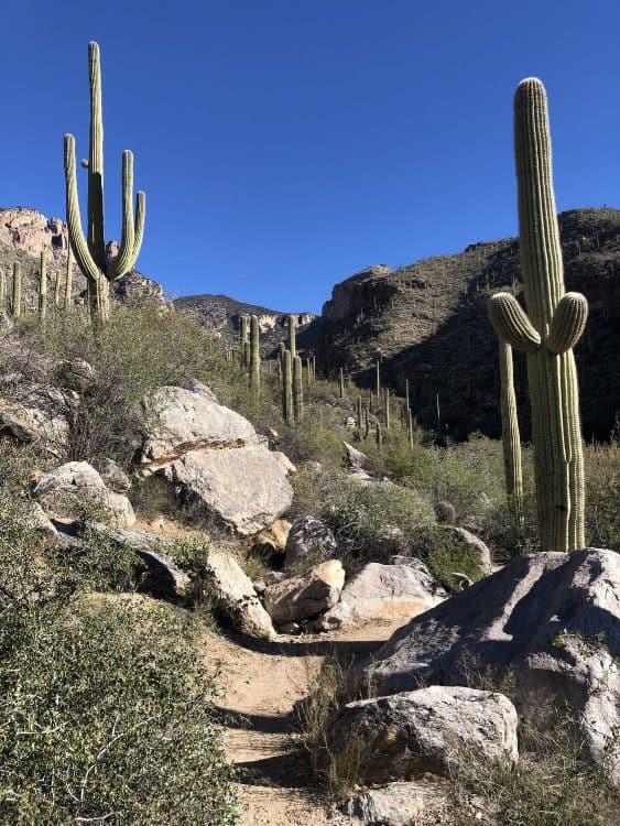 Finger Rock Trail : finger, trail, Finger, Trail, Hiking, Guide, TucsonTopia