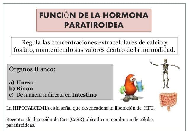 Hormonas paratiroideas funcin enfermedades sntomas y ms