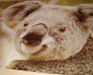 puzzle-coala