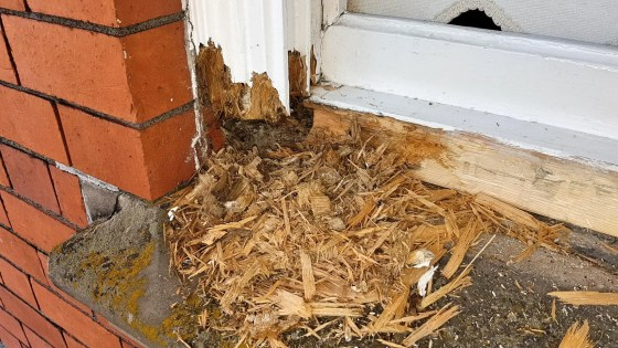 Carpenters-Shrewsbury-sash-window-Rot-repair0