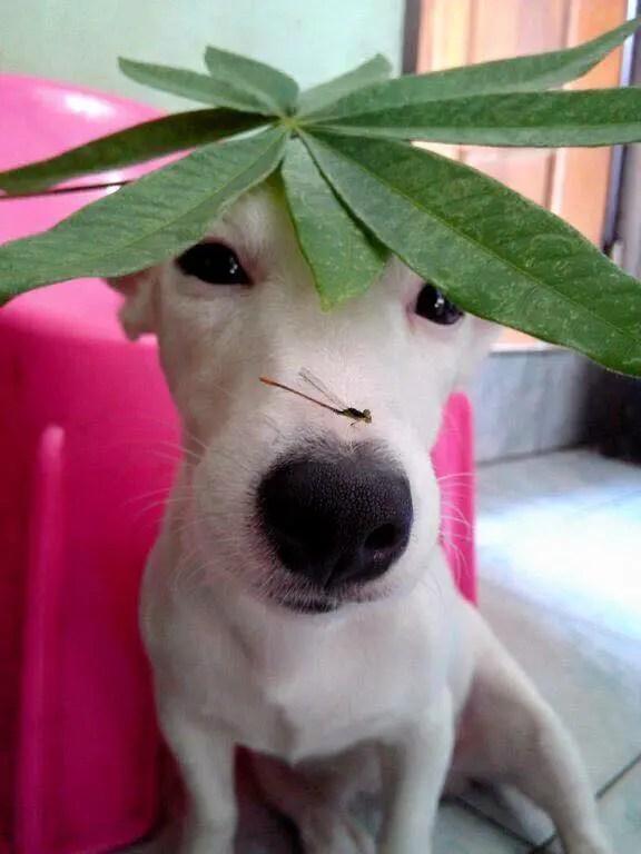 Conhea o cachorro sorridente da Tailndia Euro  Tudo