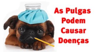 As Pulgas Podem Causar Doenças
