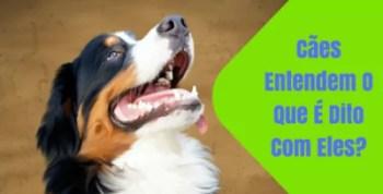 Cães Entendem O Que É Dito Com Eles?