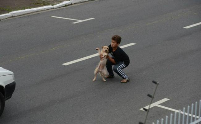 Criança para o trânsito para socorrer cachorro atropelado