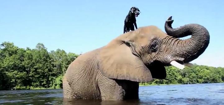 animals videos elephant tuenight