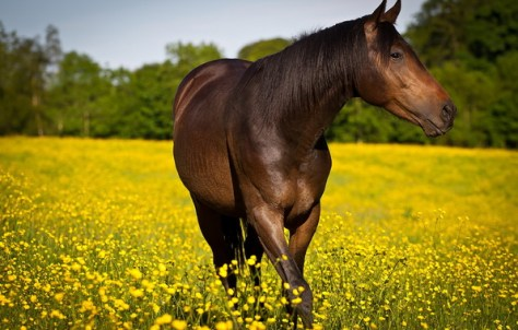 What Is Falling Action Of The Yellow Wallpaper Treating Your Horse S Summertime Allergies Tuesday S Horse