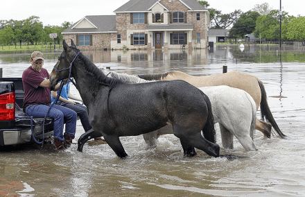 Thumbnail for Friday Foto: Horses rescued from Houston floods