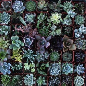 LGBTQA Succulent Sale @ Table outside Food For Thought