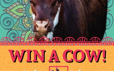 WIN A COW