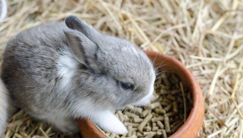 El estrés en conejos