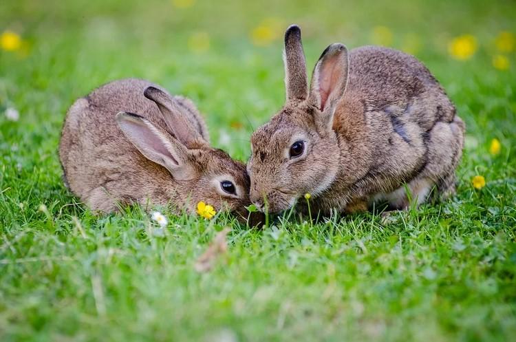 Cómo se comunican los conejos entre sí y con su dueño