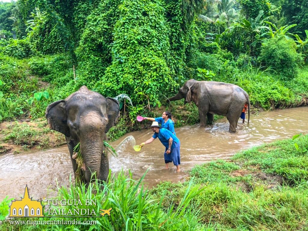 Interactuando con elefantes en Tailandia.