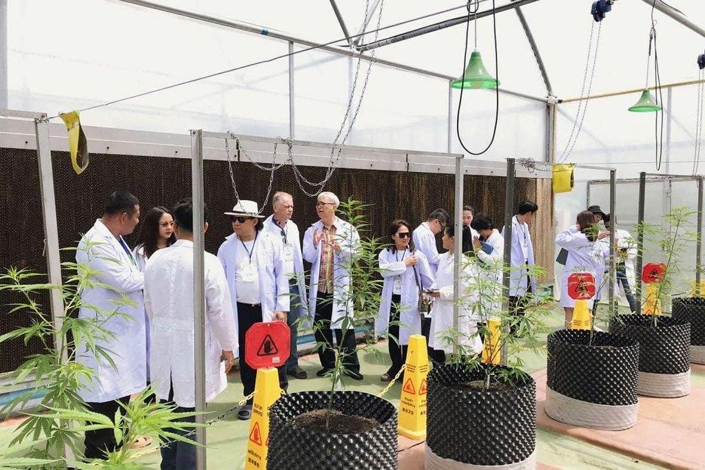Recorridos educativos sobre cannabis en la Universidad Tecnológica de Rajamangala Isan, campus de Sakon Nakhon.