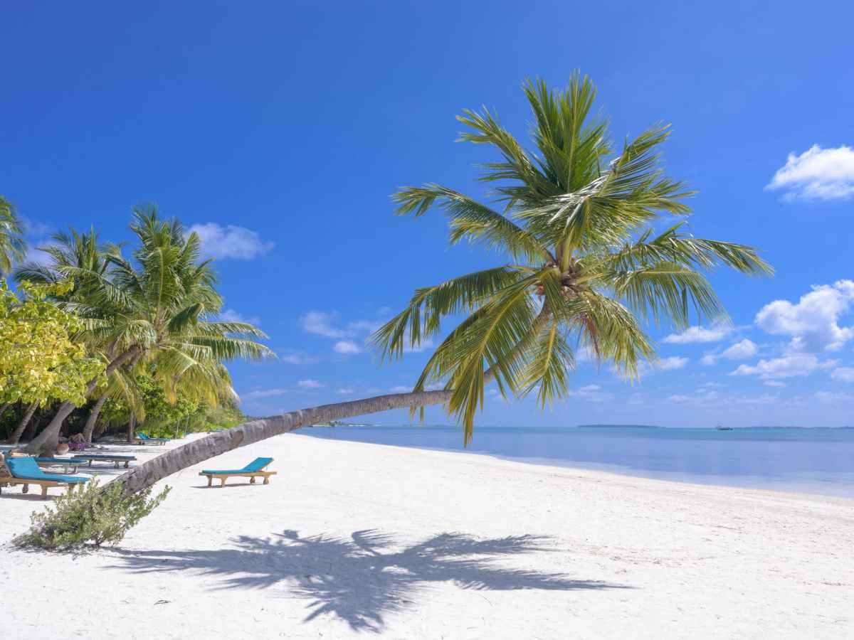 photo of coconut trees on seashore