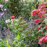 Combineren met vaste planten in de border