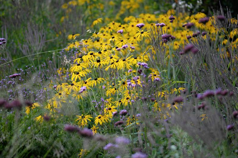 Fleurige vaste planten in het zonnetje