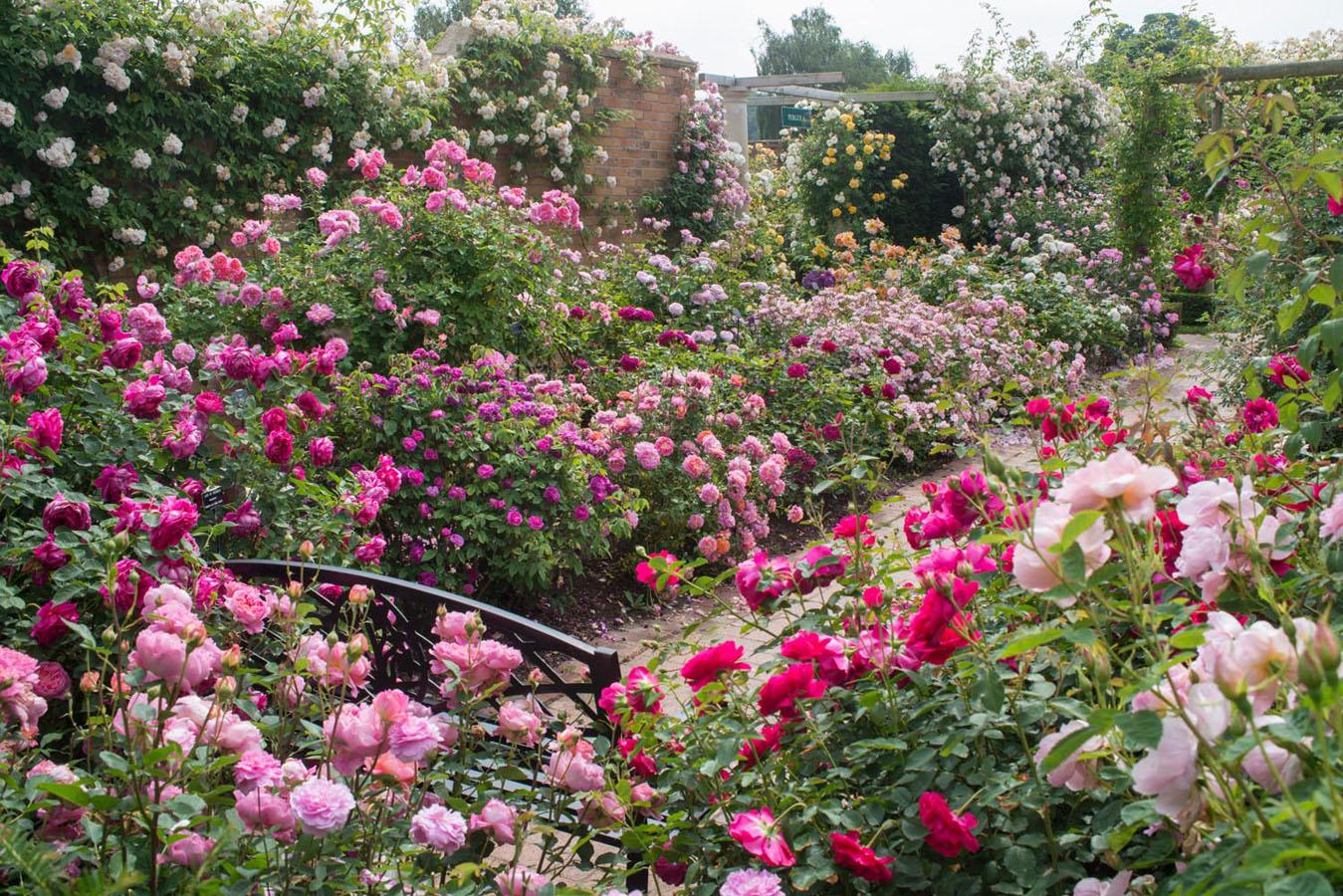 De opkomst van Rosaria, speciale Rozentuinen