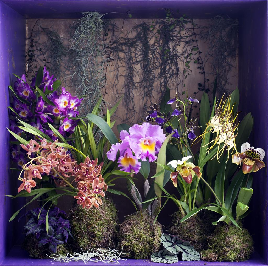 De Orchidee, sprookjesachtig mooi vol kleur en geur