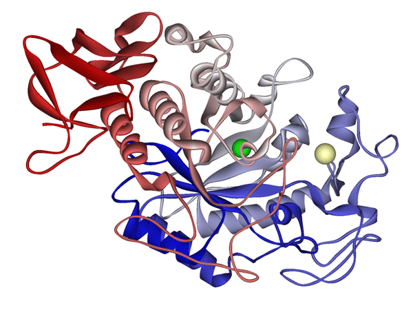 Classification of enzyme