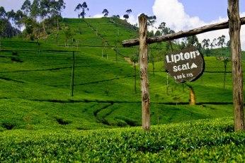 travel-footprint-haputale-tea-liptons-seat