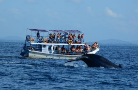 whale-watching-in-sri-lanka