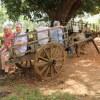 Oxen cart ride – Habarana Lake Sri Lanka