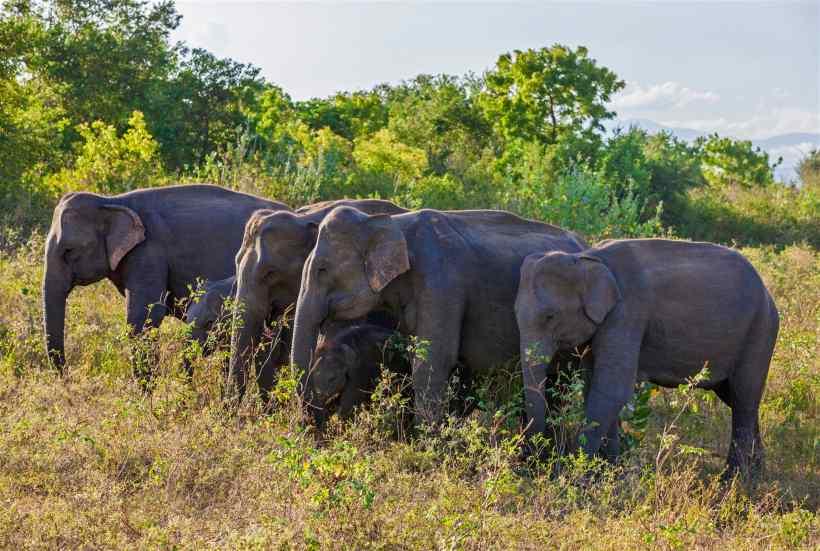 6a5198f118c844171dc12640b4ab06e5-uda-walawe-national-park