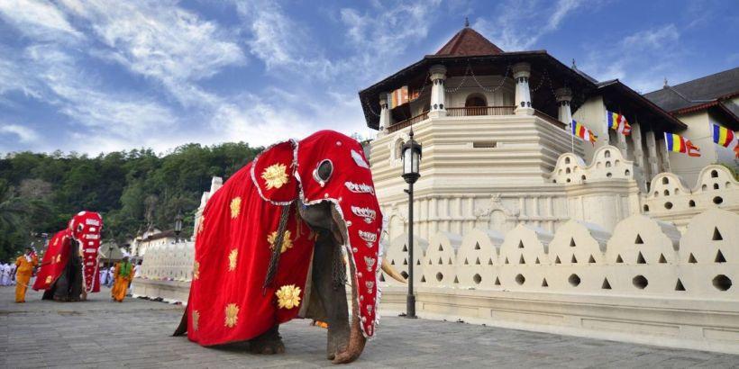 SAFFRON-Srilanka_Kanday