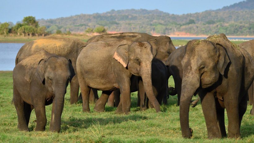 nws-sri-lanka-elephant-gathering