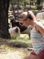 Kühe am Schamanenspot