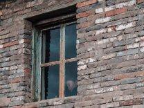 Hinter Fenstern