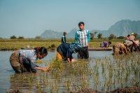 Reispflanzer I