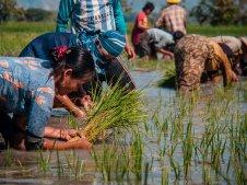 Reispflanzer III