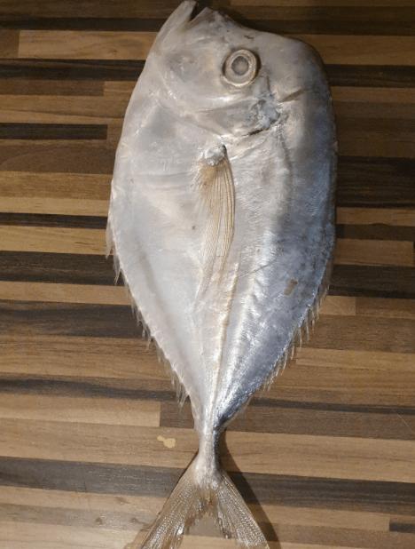 Silver-Pomfret-Rupchada-mach-Tukwila online market Germany