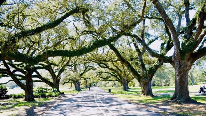 More than Just Audubon: NOLA Parks to Explore