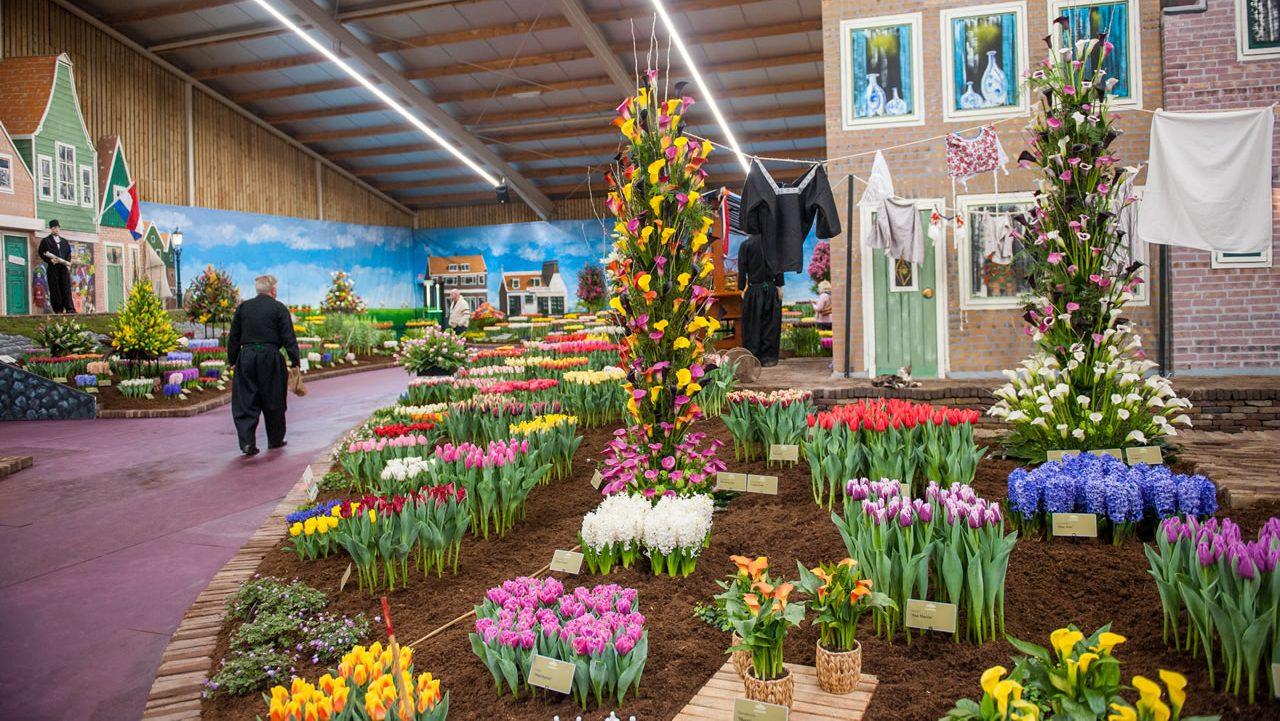 Spring Garden Breezand Tulip Festival Amsterdam
