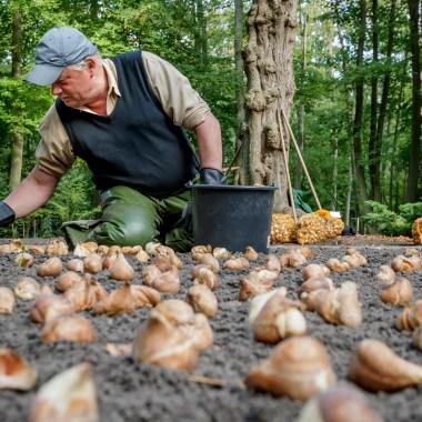 planting_bulbs keukenhof