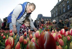 National Tulip Day Amsterdam