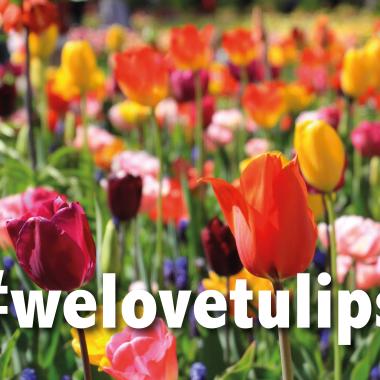 Hashtag welovetulips