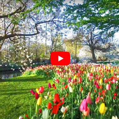 top video's of the tulip fields