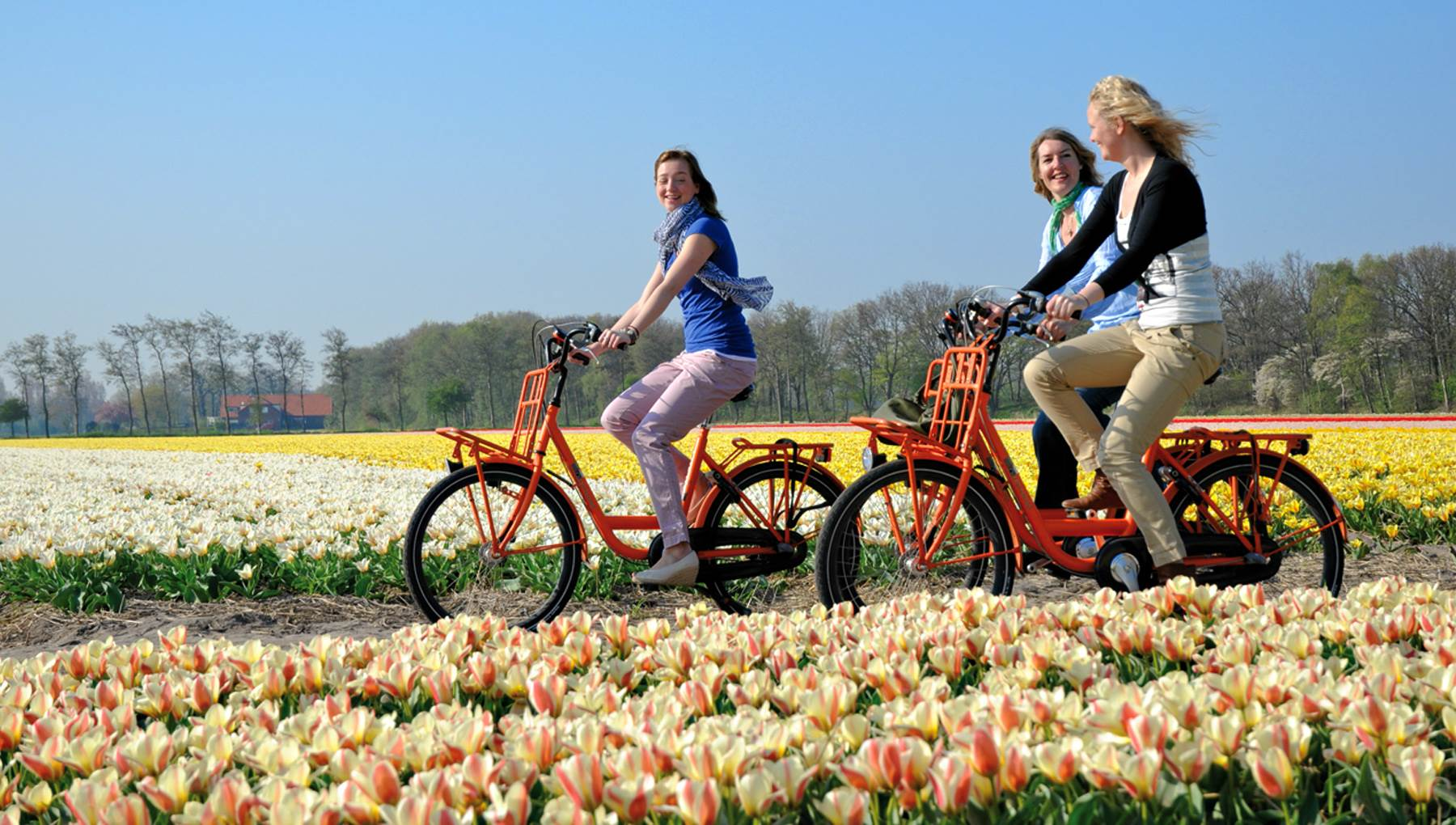 The Best Walking Cycling And Car Routes Through The Dutch Flower