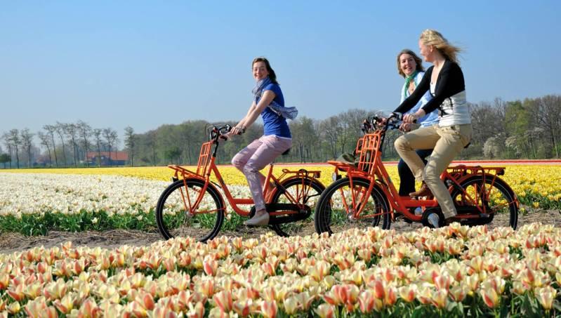 bicycle route keukenhof flower fields