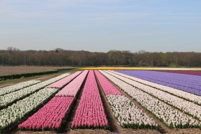Flower fields area