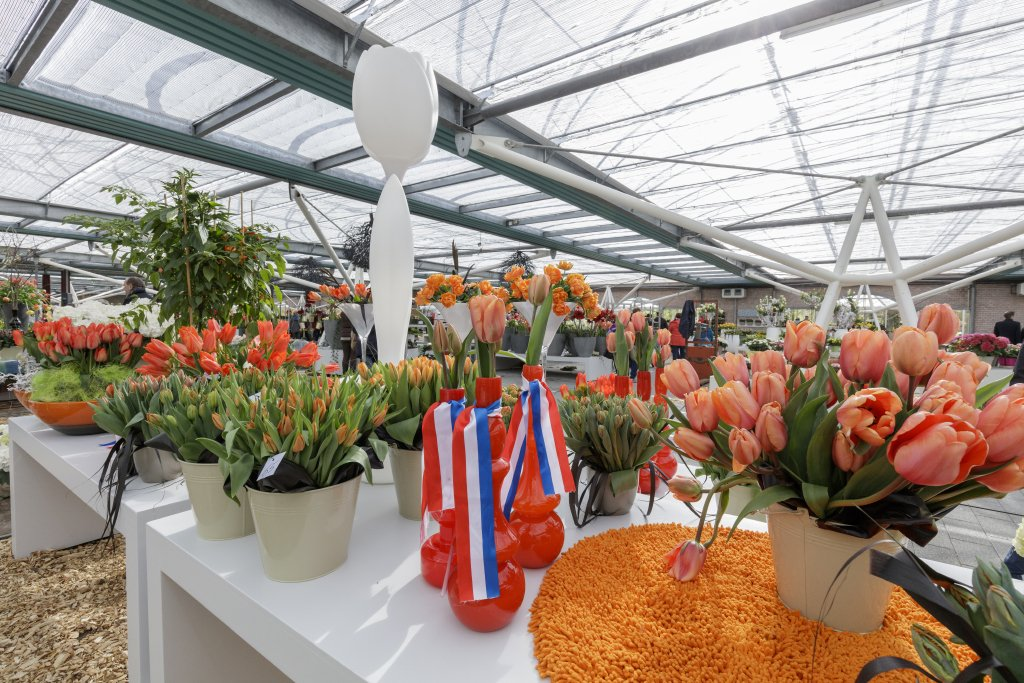 King's day Keukenhof