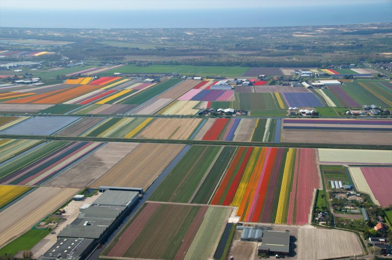 helicopter tulip fields Amsterdam