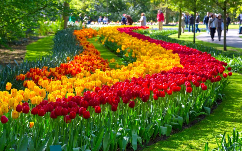 Tours and tickets Amsterdam Tulip Festival Keukenhof