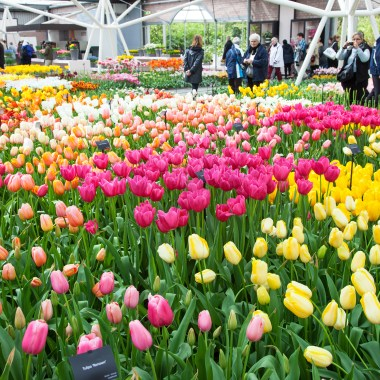 indoor tulip shows Keukenhof